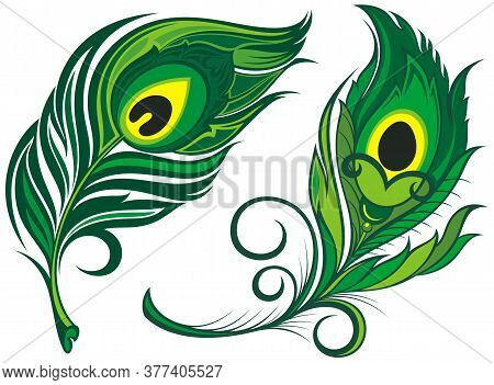 Stylized, Vector Peacock Feathers. Set Of  Feathers