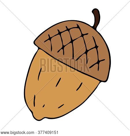 Forest Acorn Light Brown, Freehand Drawing, Vector Doodle Style Element, Black Outline