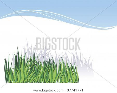 Grass, Isolated On White Background