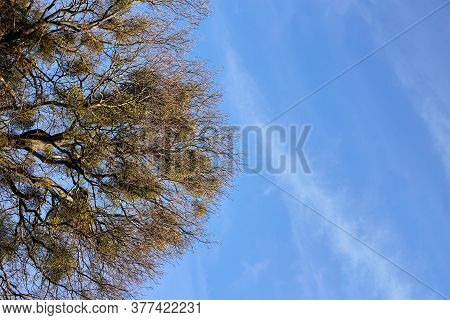 Leafless Tree On Blue Sky Background With Copy Space
