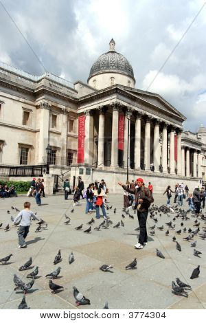 London, Trafalgar Square Pigeons