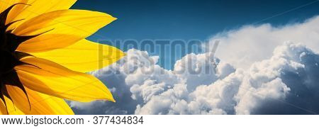 Sunflower flower closeup over epic white clouds in blue summer sky background. Copyspace.