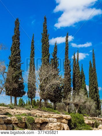 Cypress Alleys. Small, scenic desert park around the Ben Gurion Memorial. Israel. Steep rock on a natural plateau.