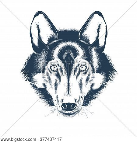 Portrait Of A Wolf Head. Wolf Face Drawing Sketch. Realistic Hand Drawn Vector Illustration