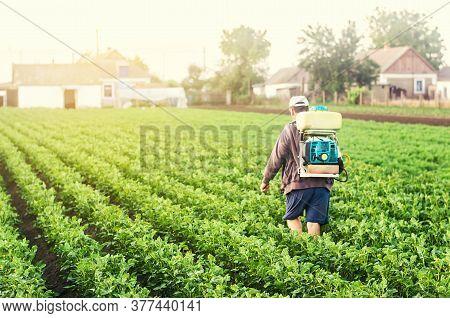 A Farmer With A Sprayer Walks Through The Potato Plantation. Treatment Of The Farm Field Against Ins
