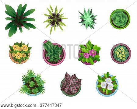 Collection Of Plant Top View In Pots. Home Plant Set. Cactus, Green Leaves Concept. Interior House G