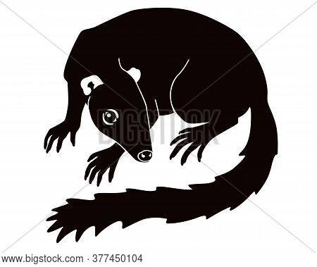 Treeshrew Silhouette. Tupaia - Small Asian Animal - Vector Black Silhouette Illustration. Small Tree