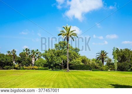 Magnificent park on the slopes of Mount Carmel in Israel. Large green grassy meadow in the center of the park. Great walk in a clean well-kept park