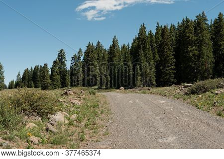 Gravel Road Through A High Country Meadow On A Summer Morning