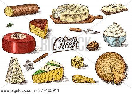 Cheese Set. Slices Of Mascarpone Bleu De Gex Edam Camembert Mozzarella For Market Or Grocery Store.