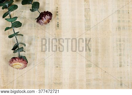 Preserved flowers on a sheet of papyrus