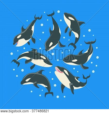 Killer Whales Pattern Of Round Shape, Grampus Or Orcinus Orca Whale Marine Predatory Fish Vector Ill