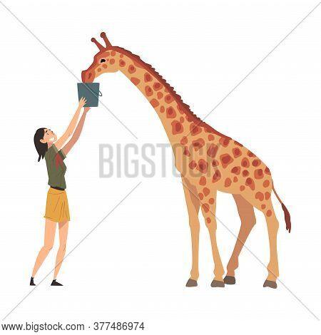 Female Zoo Worker Feeding Giraffe, Veterinarian Or Professional Zookeeper Character Caring Of Wild A