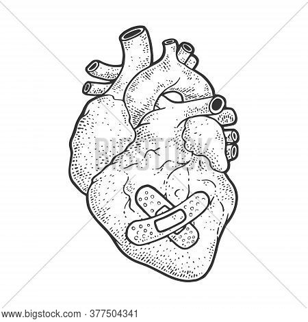 Anatomical Human Heart With Adhesive Bandage Patch Plaster Sketch Engraving Vector Illustration. T-s