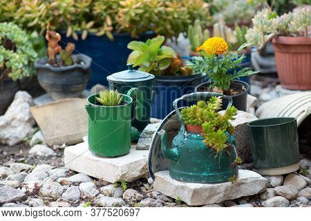 Reused Planter Ideas. Second-hand Kettles, Saucepans, Old Teapots Turn Into Garden Flower Pots. Recy