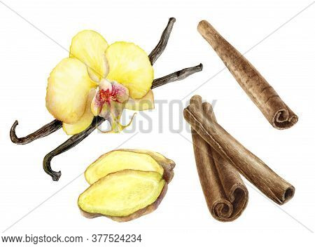 Cinnamon Sticks Vanilla Sticks And Flower And Ginger Slices Watercolor Illustration Isolated On Whit