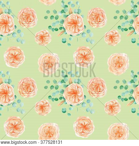 Seamless Pattern With Peach And Orange With English Rose Austin Flower And Eucalyptus Background And