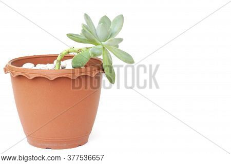 Cactus Or Succulent Plant In Brown Plastic Pot Isolated On White Background.
