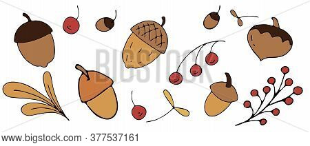Autumn Harvest From The Forest - Nuts, Acorns, Mountain Ash, Freehand Drawing, Vector Set Of Element