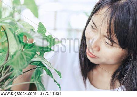 Woman Hand Holding Fresh Green Arrowhead Vine Plant (syngonium Podophyllum) In Black Pot
