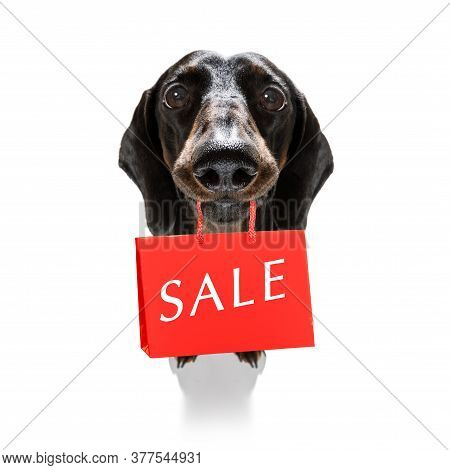 Dachshund Sausage Dog With Shopping Bags Ready For Discount And Sale At The  Mall, Isolated On White