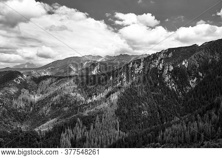 A Mountain Slope With A Mountain Pine And Limestone Rocks In The Mountains Tatry In Poland, Black An