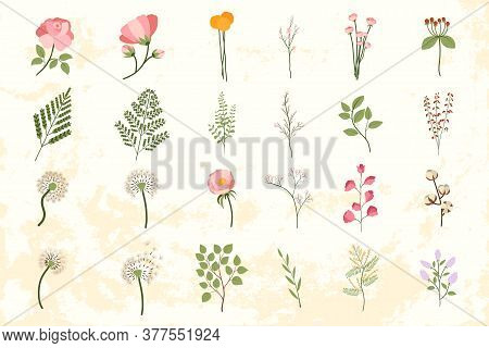Big Set With Floral Elements. Trendy Vector Wedding Template For Decoration Design. Fern, Peony, Dan