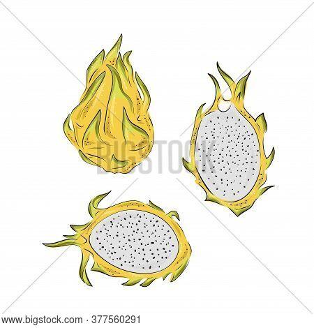 Dragon Fruit Vector Drawing Set. Hand Drawn Tropical Food Illustration. Yellow Summer Dragonfruit. W