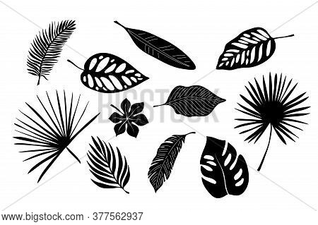 Tropical Exotic Leaves Of Palm, Monstera, Coconut, Banana Tree. Set Of Elements, Vector Illustrated,