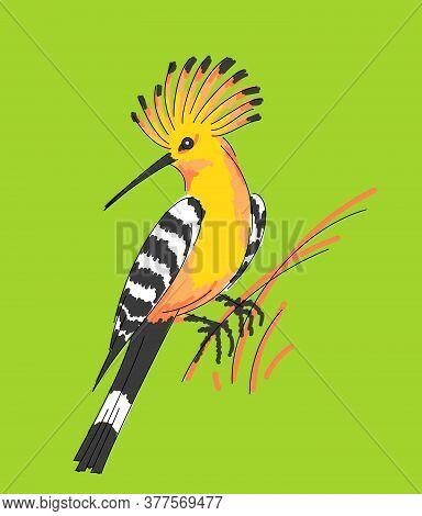 Orange Bird Eurasian Hoopoe, Upupa Epops, Sitting On Grass. Vector Illustration.