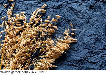 Golden Oats On Blue-gray Cotton Fabric For A Design On The Theme Of Harvest, Farming.