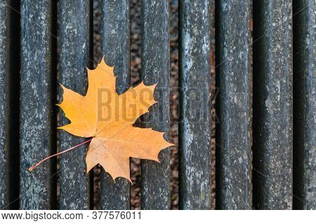 Orange And Yellow Autumn Maple Leaf On Old Gray Bench Background. Fall Maple Leaf Lying On Aged Wood
