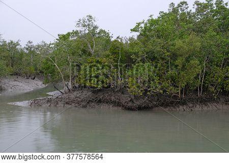 Mangrove forest, Sundarbans, Ganges delta, West Bengal, India