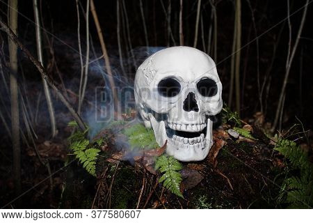 Grinning White Human Skull With Blue Smoke Around On Wet Ground With Plants