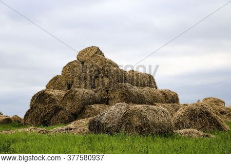 .golden Rolls Of Hay, Stacked In Pyramid, Lie At Edge Of The Field. Autumn Harvesting Of Hay, In Cyl