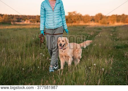 Obedient Golden Retriever Dog With His Owner Practicing Paw Command. Happiness And Friendship. Pet A