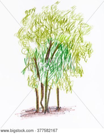 Sketch Of Several Trees In Summer Hand-drawn By Color Pencils On White Paper