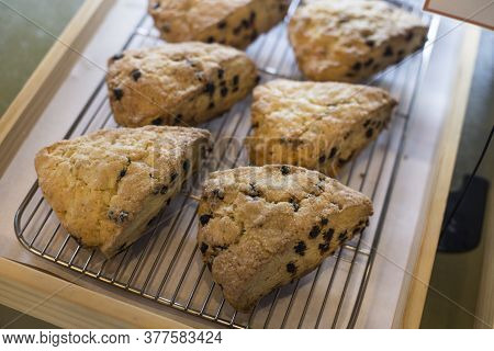 Scones With Chocolate Chips Lined Up On A White Plate.