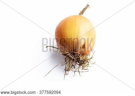 On A White Background. No Isolation. Onion Head. Long Storage, Spoiled, Numb. Close-up.