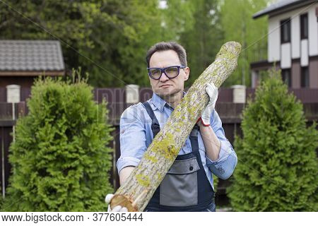 A Man In Overalls And Goggles Carries A Tree Trunk From A Forest On His Shoulder. Hard Wood Working