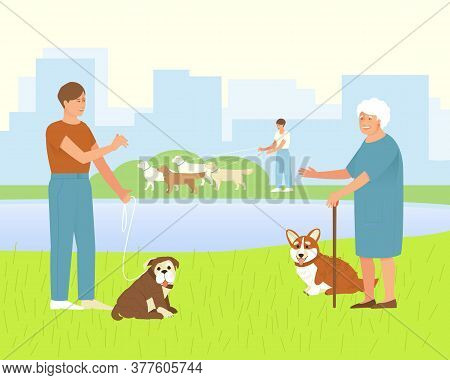 Pembroke Corgi With An Elderly Mistress For A Walk In A Dog Park. The Owner Of An English Bulldog Is