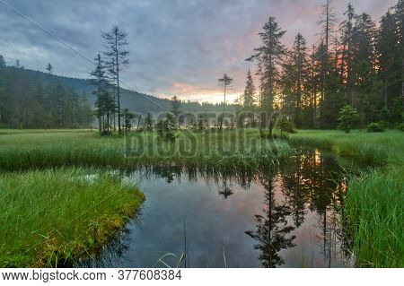 Great Arber Lake With A Row Of Firs, At Morning Haze In The Bavarian Forest In South Germany.