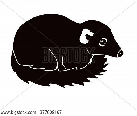 Tupaia Silhouette - Small Primate - Vector Picture For Logo Or Pictogram. Asian Small Animal - Tupai