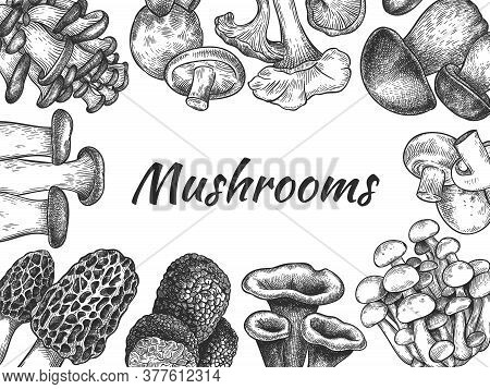 Mushrooms. Hand Drawn Different Mushrooms Organic Vegetarian Product Food, Sketch Design For Menu, L