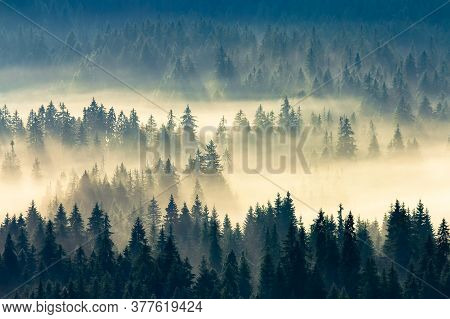 Misty Nature Background. Fog In The Mountain Valley. Landscape With Coniferous Forest View From The