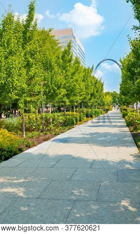 St Louis Usa - September 2 2014: Ginkgo Trees And Gardens Line And Shade Path Through St Louis City