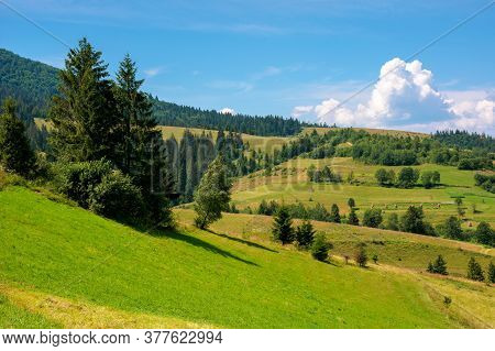 Rural Fields On A Sunny Summer Day. Trees On The Grassy Hills. Beautiful Countryside Scenery Of Carp