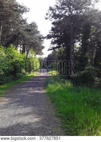 A Forest Road In The Haci Osman Grove Park In Istanbul Turkey In May.