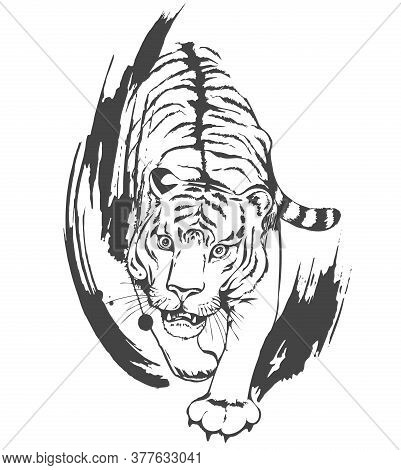Aggressive Attacking Tiger On The Hunt. Black Contour With Brush Strokes Isolated On White Backgroun