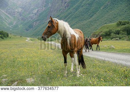 Horses With A Foal Walking In The Mountains On A Meadow On A Warm Summer Day.